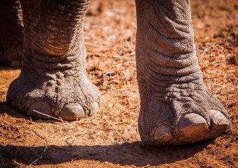 elephant-feet-1-of-1