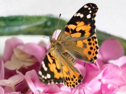 butterfly full body (1 of 1)