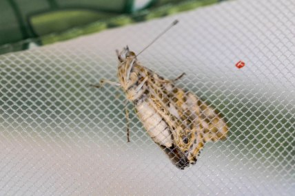 butterfly underneath body (1 of 1)
